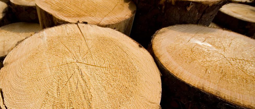 Verwendete Holzarten