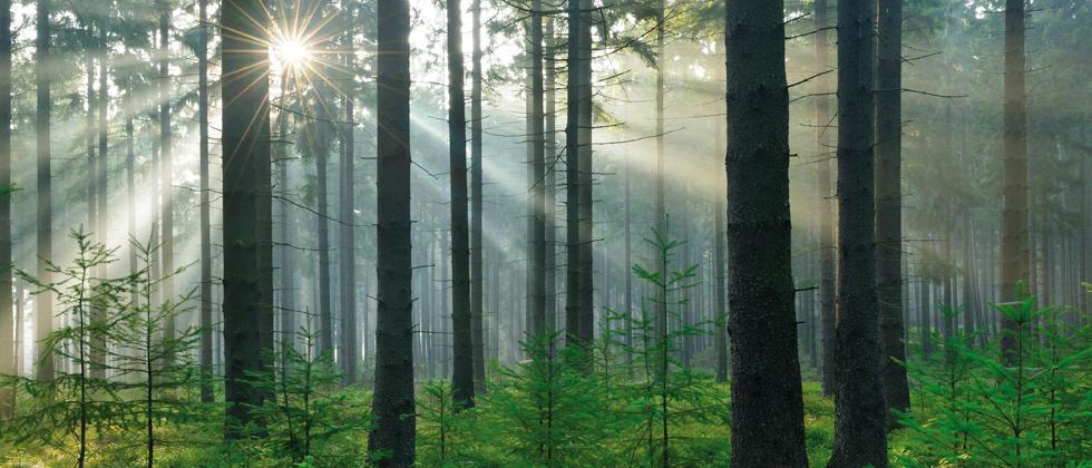 الزراعة المستدامة للغابات