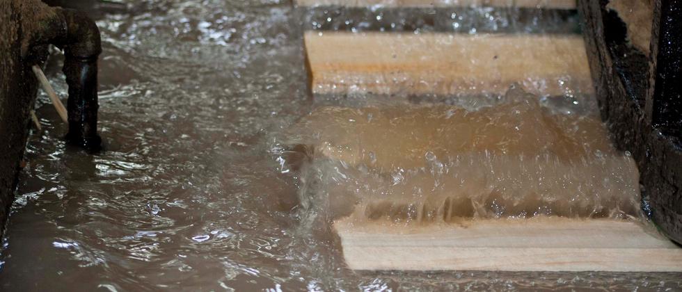 معالجة الأخشاب لمنع البقع الزرقاء